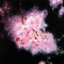 「桜圖 ... 春の余白」 4号F(33.3×24.2cm) 油彩画、アルミ箔、プラチナ箔