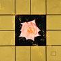 「薔薇圖 ... 白とピンクの余白」 4号S(33.3×33.3cm) 油彩画、金箔