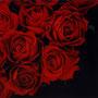 「薔薇圖 ... 赤の余白」 4号P(33.3×22.0cm) 油彩画、銀箔