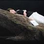 第86回白日会展(2010) 会友推挙/「余白の芸術」/100号変(162.0×81.0cm)/油彩、布(キャラコ)、パネル