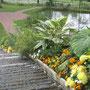 Le jardin des planes médicinales et aromatiques à Chemillé