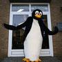 Pinguin KiKu- Hiltrup
