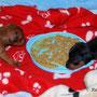 Amina & Akilah versuchen nun ihren ersten Babybrei mit 3,5 Wochen