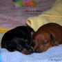 Akilah & Amina sind nun 4 Wochen alt.