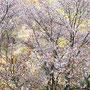 里山の春 (八王子市・多摩森林科学館)
