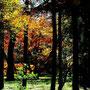 對島瞭 秋彩の森 (埼玉県・平林寺)
