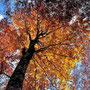 秋の彩 (秋田県・森吉山麓高原)