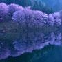 湖岸に咲く (長野県・木崎湖)