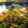 秋の池塘 (新潟県糸魚川) 中山康以