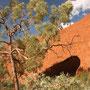 Auch hier gibt es jede Menge Eykalyptusbäume