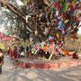 Einer der Bodhi-Bäume