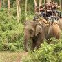 Auf dem Rücken der Elefanten lässt sich alles viel besser beobachten