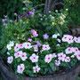 高原地帯で新鮮な野菜がとれ、別荘の周りには花が咲き乱れています。
