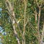 35 Parco Adda Sud. 17.08.2011