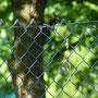13 Agrate, giardino via De Gasperi, 16.05.2010