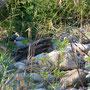 8 Parco Adda Sud,24.06.2011