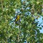 40 Parco Adda Sud, 04.05.2012