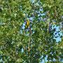39 Parco Adda Sud, 04.05.2012