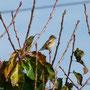 20 Agrate, giardino via De Gasperi, 30.10.2010