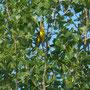36 Parco Adda Sud, 04.05.2012
