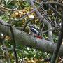 79 Agrate, giardino via De Gasperi, 22 .08-2010