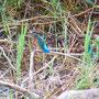 24 Colico (LC), foce Adda, 29.08.2011