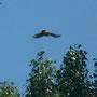 5 Parco Adda Sud, 03.06.2010