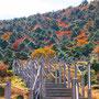 Mount Hallasan, UNESCO, Jeju Island