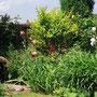 Le Jardin de Dan : le bain d'oiseau encadré de vivaces et arbustes