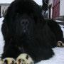 Sa maman: Fekete Panda S. Grandiouse Black Arwen