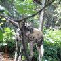 ein painted hunting dog (afriianischer Wildhund) - halt auch nur ein Hund mit Blödheiten im Kopf ;-)