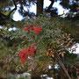 3月2日(日)京都相国寺の庭の南天