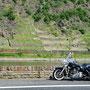 fotoCard Harley # 95005