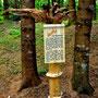 """LandArt Pfalzen """"Kunst in und mit der Natur"""""""