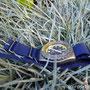 Band: Nato G10 »Navy« | Uhr: Beuchat Ushuaia 1000