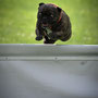 Anouck fly...