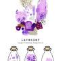 ラベンダー / Lavender