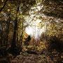 und später weiter unten im Blätterwald fortführten.