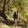 bis wir den nächsten Trail Richtung Calven Wald in herbstlicher Stimmung - hier im Nadelwald