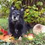 mit bunten Blättern, frisch geernteten Äpfeln und einem Riesenparasol <3