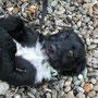 Tiko, Bub <3, ängstlich, unterwürfig, liebt es gekrault zu werden
