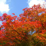 あ~、きれいだなァ。比叡山の冬ももう少しです。
