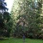 fuori dal ripido bosco