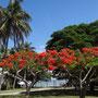 Schöne blühende Bäume und Palmen an jeder Ecke
