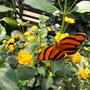 Im Papillorama von Hunawihr