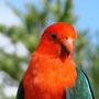 auch hier gibts an jeder Ecke bunte Vögel