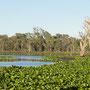 Los gehts auf Erkundungstour durch Seen und Tümpel mit vielen Vögeln