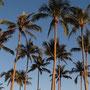 Palmen in der ganzen Hotelanlage