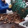 Frischer gehts nicht: Meeresfrüchte direkt auf der Schifffahrt
