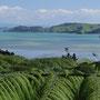 Willkommen in Neuseeland! Die Halbinsel Coromandel ist landschaftlich einfach fantastisch